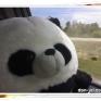 Bear_Don-jai006
