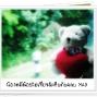 LittleBear_002.JPG
