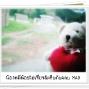 LittleBear_020.JPG
