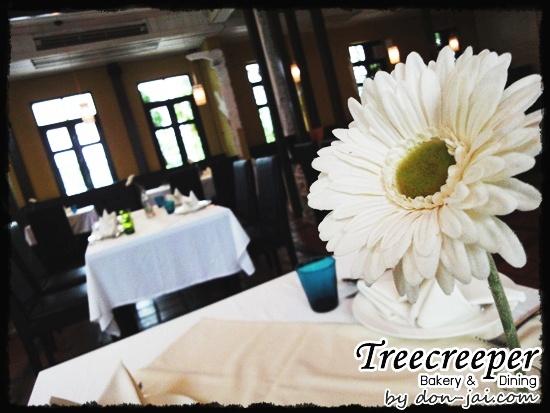 Treecreeper_Silom025