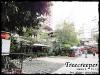 Treecreeper_Silom020
