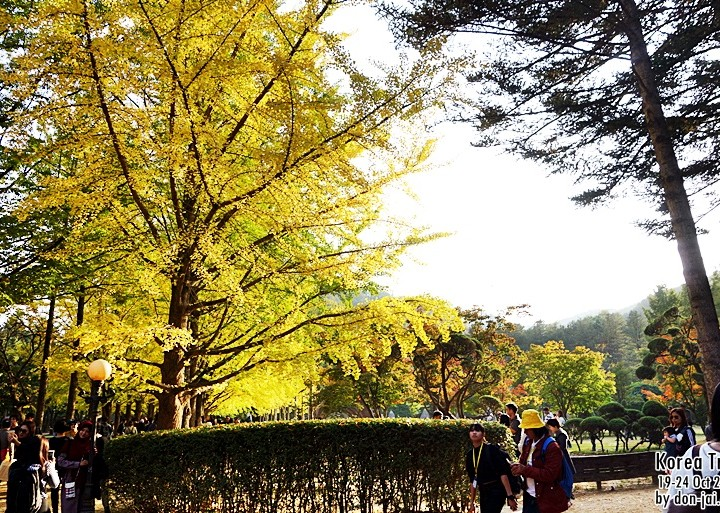 รีวิวโดนใจ >> Korea Trip Day1 : ออกจากกรุงเทพ - ถึงเกาหลี - เที่ยวเกาะนามิ