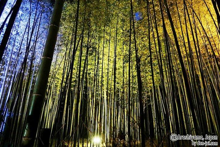 โดนใจไปญี่ปุ่น >>Kyoto Arashiyama Hanatouro (Lighting Up) 2016 เกียวโต,ญี่ปุ่น